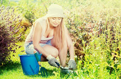 Woman working in garden using horticultural instruments on summe. Glad young blond woman working in garden using horticultural instruments on summer day Royalty Free Stock Photo
