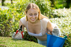 Woman working with green bush using horticultural tools. Beautiful young woman working with green bush using horticultural tools on sunny day Royalty Free Stock Images
