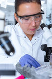 Woman working with a microscope in a lab Royalty Free Stock Photo