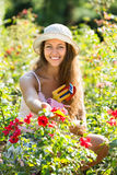 Woman working in roses plants Royalty Free Stock Photo