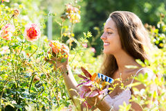 Woman working in roses plants Royalty Free Stock Images