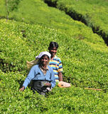Woman working in tea plantation Stock Photos