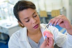 Woman working on teeth denture. Woman working on a teeth denture stock photography