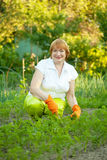 Woman working in  vegetable garden Stock Image