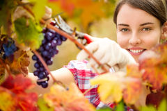 Woman working in vineyard Royalty Free Stock Images