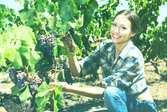Woman working on winery yard Royalty Free Stock Photography