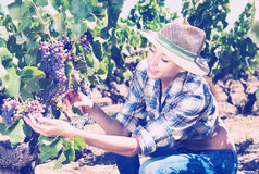 Woman working on winery yard Stock Photos