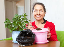 Woman works with  flower pots Royalty Free Stock Photo