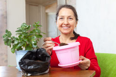 Woman works with  flower pots Royalty Free Stock Image