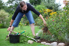 Woman works in the garden stock photography