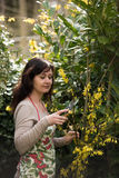 Woman works in garden Stock Images