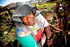 Woman works in her vegetable garden Royalty Free Stock Photos