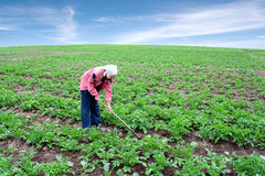 Woman works on a kitchen garden Stock Image