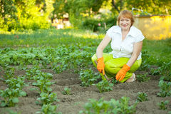 Woman works in potato plant. Happy mature woman works in potato plant stock images