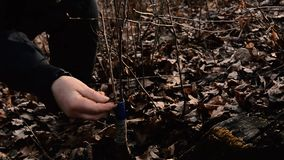 Woman wraps a graft tree with an insulating tape in the garden to detain the damp in it in close-up. 2019 stock video