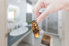 Woman's Hand holding cockroach on toilet background Stock Photos