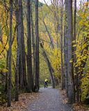 Woman Riding Bike Amongst Autumn Leaves Arrowtown New Zealand. Woman in yellow jacket riding her bike along a pathway framed with tall trees with yellow autumn Royalty Free Stock Photos