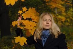 Woman with yellow maple leaves Royalty Free Stock Photography