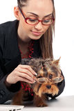 Woman with Yorkshire Terrier Royalty Free Stock Photography