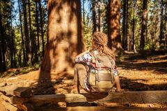 Woman in Yosimite national park near sequoia in California, USA.  stock photography