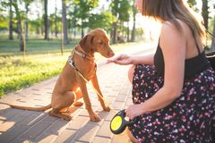 Woman and a young dog in a park on a walk. Girl feeds the dog with her hands on the alley in the park. Woman and a young dog in a park on a walk. girl feeds the royalty free stock images