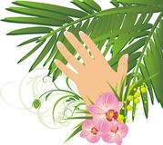 Womanish hand and branch of palm Royalty Free Stock Photos