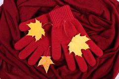 Womanly gloves and autumnal leaves on burgundy shawl background Stock Image