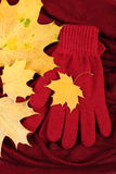 Womanly gloves and autumnal leaves on burgundy shawl background. Warm clothing for autumn or winter Royalty Free Stock Photos