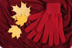 Womanly gloves and autumnal leaves on burgundy shawl background. Warm clothing for autumn or winter Stock Images