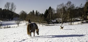 A womans adventure with horse and dog. A womans adventure in the snow with horse and dog Royalty Free Stock Photos