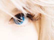 Womans eye in blue contacts. Closeup of womans eye in blue contacts Royalty Free Stock Photography