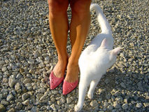 Womans feet. Woman wearing pink shoes and a white cat Stock Image