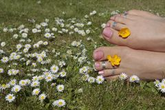 Womans feet in sunny meadow Royalty Free Stock Images