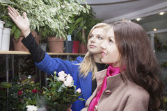 Womans in a flower shop Royalty Free Stock Photos