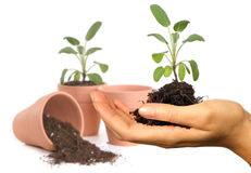 Womans Hand Holding New Springtime Seedling. With Potting Pots in the Background. Background is Intentionally Out of Focus Royalty Free Stock Photography
