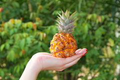 The womans hand holds pineapple Royalty Free Stock Photos