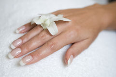 Womans hand and orchid. Womans hand with a french manicure on the towel and orchid Royalty Free Stock Images