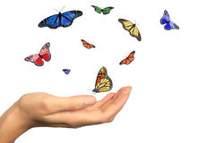 Womans Hand Releasing Beautiful Butterflies Royalty Free Stock Photo