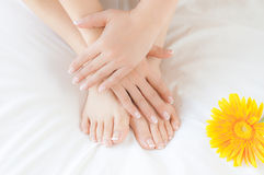Womans hands and feet after a beauty treatment Stock Images