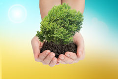 Womans hands holding green tree with mould Stock Photography