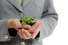 Womans hands holding a handful of earth with a plant Stock Images