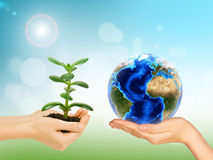 Womans hands holding money tree and Earth Royalty Free Stock Photography