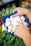 Womans hands holding mushrooms Stock Photo
