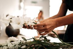 Womans hands are holding a stalk with white day-lily over a table in a flower shop stock image