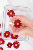 Womans hands after a manicure and polish Royalty Free Stock Photos