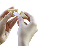 Womans Hands Open a Fortune Cookie Royalty Free Stock Image