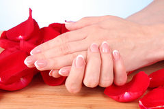 womans handson  rose petals Royalty Free Stock Photography