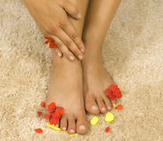 Womans legs with petals Stock Photo