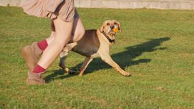 A womans legs running with cute dog on a green grass stock video footage