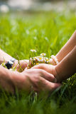 Womans and mans hands and bouquet of camomiles. Womans and mans hands touching and hold bouquet of camomiles on a grass Stock Photo